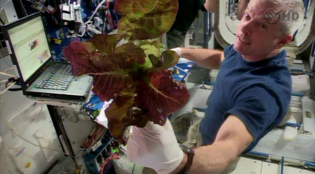 Commander Steve Swanson shows off a red romaine lettuce plant he harvested from the Veggie facility aboard the International Space Station. Image Source: NASA TV
