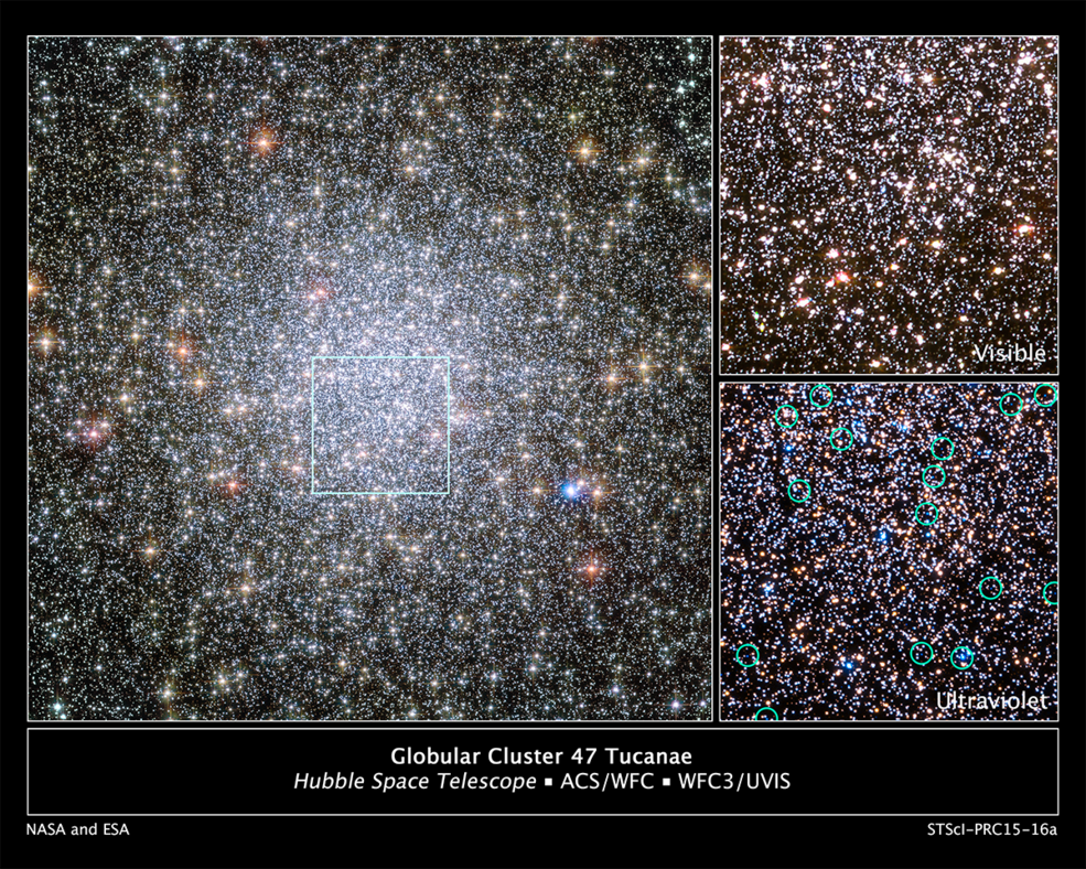 The heart of the giant globular star cluster 47 Tucanae in the Hubble Space Telescope image at left reveals the glow of 200,000 stars. The green box outlines the cluster's crowded core, where Hubble spied a parade of young white dwarfs starting their slow-paced 40-million-year journey to the less populated suburbs. The stellar relics are too faint to be seen clearly in visible light, as shown in the Hubble image at top right. But in ultraviolet light the stars glow brightly because they are extremely hot, as shown in the image at bottom right, taken by Hubble's Wide Field Camera 3. The green circles in the image outline the brightest of the young white dwarfs spied by Hubble. Image Credit: NASA, ESA, and H. Richer and J. Heyl (University of British Columbia, Vancouver, Canada); acknowledgement: J. Mack (STScI) and G. Piotto (University of Padova, Italy
