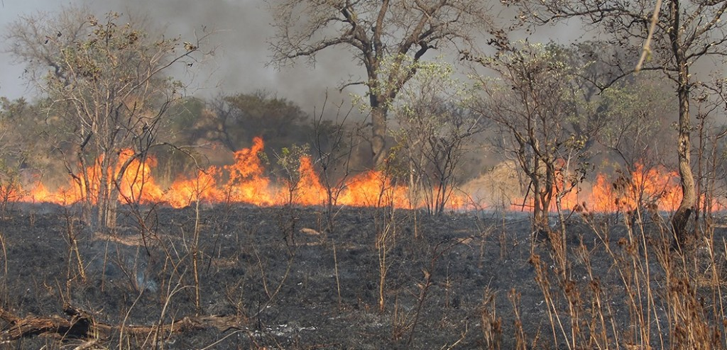 A 2014 international field campaign in South Africa's Kruger National Park validated several satellite fire detection products including the new Suomi NPP 375-meter product. Image Credit: Meraka Institute CSIR, South Africa