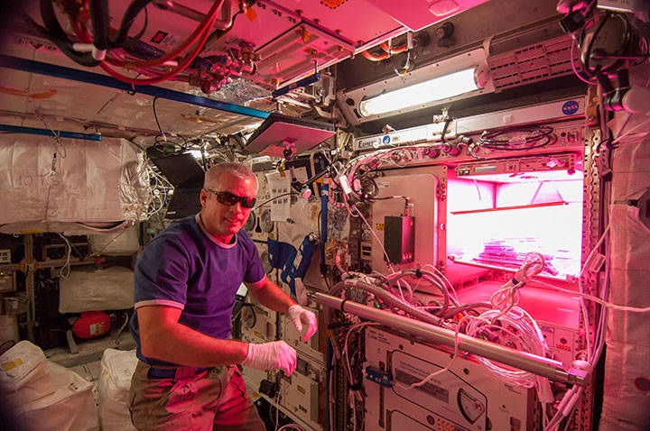 Colorado astronaut Steve Swanson of Expedition 39 activated the red, blue and green LED lights of the Veggie plant growth system on May 7, 2014. Image Credit: NASA