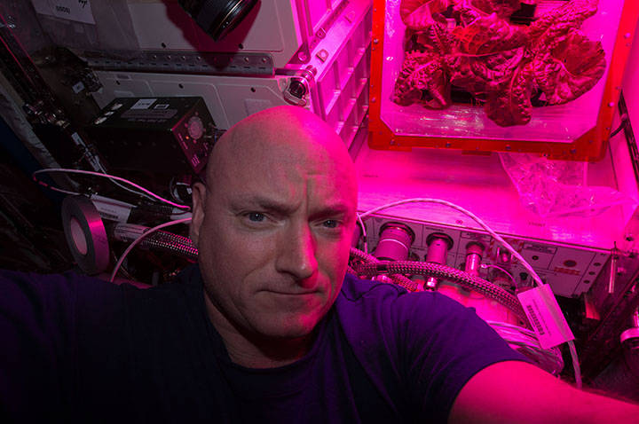 NASA astronaut Scott Kelly took this selfie with the second crop of red romaine lettuce in August of 2015. Image Credit: NASA
