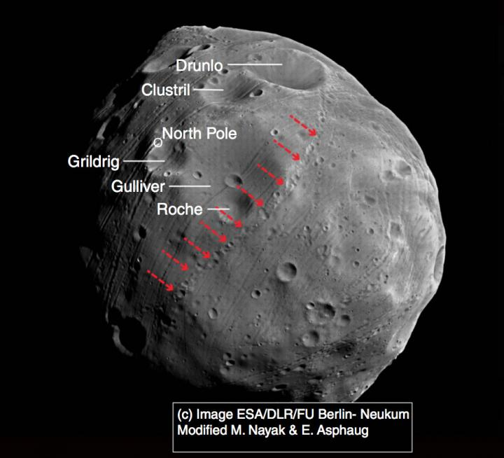 In this spacecraft image of Phobos, red arrows indicate a chain of small craters whose origin researchers were able to trace back to a primary impact at the large crater known as Grildrig. Image Credit: ESA/Mars Express, modified by Nayak & Asphaug