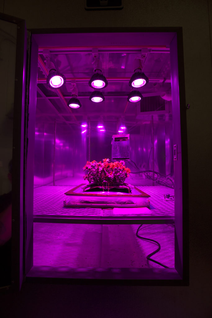 Photo of the Ground Zinnias' Harvesting inside the SSPF. Image Credit: NASA